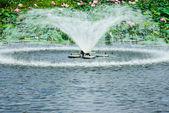 公園内の噴水 — ストック写真