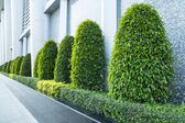 Árboles de jardín — Foto de Stock
