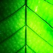 Pattern of leaves. — Stock Photo #32282339