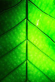 Pattern of leaves. — Stock Photo
