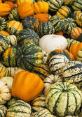 Colourful pumpkins — Stock Photo