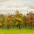 Fruit trees in a line under a dark sky — Stock Photo