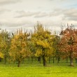 Stock Photo: Fruit trees in a line under a dark sky