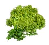 Lettuce leaves and parsley — Stock Photo