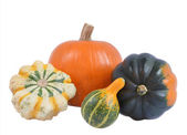 Four decorative pumpkins — Stock Photo