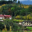 Sichuan Province, China:  Farmhouses and Autumnal Splendor — Stock Photo