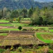 Sichuan Province, China: Farmlands in the Jianjiang River Valley — Stock Photo
