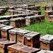 China: Wooden Beehive Boxes at a Pengzhou apiary — Foto Stock