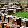 China: Wooden Beehive Boxes at a Pengzhou apiary — Stockfoto