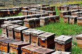 China: Wooden Beehive Boxes at a Pengzhou apiary — Stock Photo