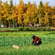 China: Farmer Working in Field on Sichuan Farm — Stock Photo