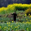 Stock Photo: China: Farmer Carrying Straw Basekts in Field of Garlic