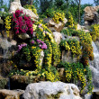 China: Chrystanthemum Display in Qingbaijiang's Phoenix Lake Park — Stock Photo
