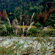 Stock Photo: SichuProvince, China: Grasses, Forests, and Jianjiang River