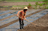 China: Woman Working in Field with Rake — Stock Photo