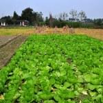 China: Sichuan Province Farmlands — Stock Photo