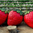 Mae Rim, Thailand:  Mae Rim Strawberry Plantation — Stockfoto