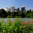 NYC:  Mid-Manhattan Skyline seen across Central Park Boating Lake — Stock Photo