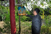 Pengzhou, China: Man Hanging Bird Cage in Pengzhou Park — 图库照片
