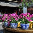 Chengdu, China: Purple Orchids at Long Tan Water Town — Stock Photo