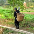 Pengzhou, China: Woman Walking in Field Carrying Basket — Stock Photo