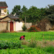 Pengzhou, China: Woman Working in Garden on Farm — Stock Photo