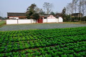China: Whitewashed Sichuan Farmhouse and field of Cabbages in Pengzhou — Stock Photo