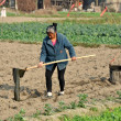 Pengzhou, China: Woman Watering Seedlings — Stock Photo