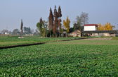 Pengzhou, China: Sichuan Province Farmlands — Stock Photo