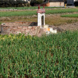 Stock Photo: Pengzhou, China: Ancestral Tomb in Field of Garlic