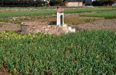 Pengzhou, China: Ancestral Tomb in Field of Garlic — Stock Photo
