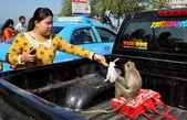 Bang Saen, Thailand: Woman Feeding Monkey — Стоковое фото