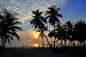 Bang Saen, Thailand: Sunset over Beach with Palm Trees — Stock Photo