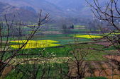 Yellow Rapeseed Fields in Sichuan Mountain Valley — Stock Photo