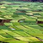 Постер, плакат: Guan Yin Xia China: Farmlands with Flooded Rice Paddies