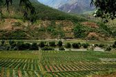Lijiang Twp: Farmlands with Strawberry Plantings — Stock Photo