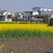 Pengzhou, China: Yellow Rapeseed and Apartment Buildings — Stock Photo