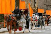 Horse Carriage and Christo's The Gates in NYC's Central Park — Stock Photo