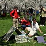 Washington, DC: Tidal Basin Cherry Trees — Stock Photo #44778395