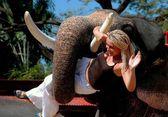 Pattaya, tailândia: mulher com elefante — Fotografia Stock