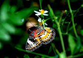 Batu Ferringhi, Malaysia: Butterfly Sipping Nectar — Stock Photo