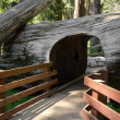 Passage in Sequoia — Stock Photo