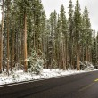 Snow in Yellowstone — Stockfoto