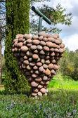 Piedra de uva — Foto de Stock
