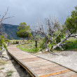 Stock Photo: Walkway at Mammoth Hot Springs