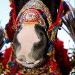Decorated horse — Stock Photo