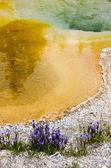 用鲜花的黄石公园间歇泉 — 图库照片