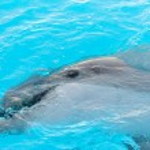 ������, ������: Dolphin