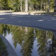Pine reflections in Yellowstone — Stock Photo