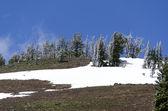 Mountains in Yellowstone — Stock Photo